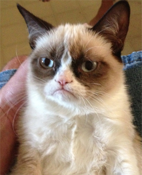 grumpy cat plain